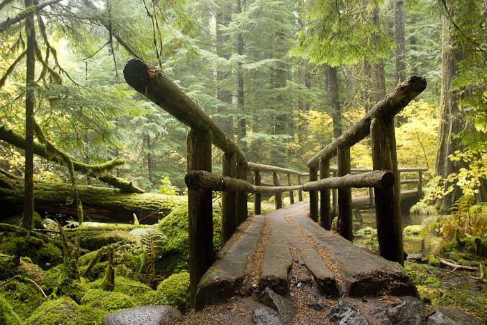 A forest footbridge at Breitenbush