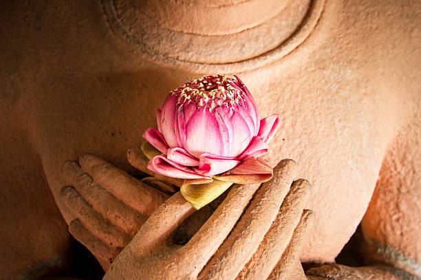 Hands holding a lotus at the heart