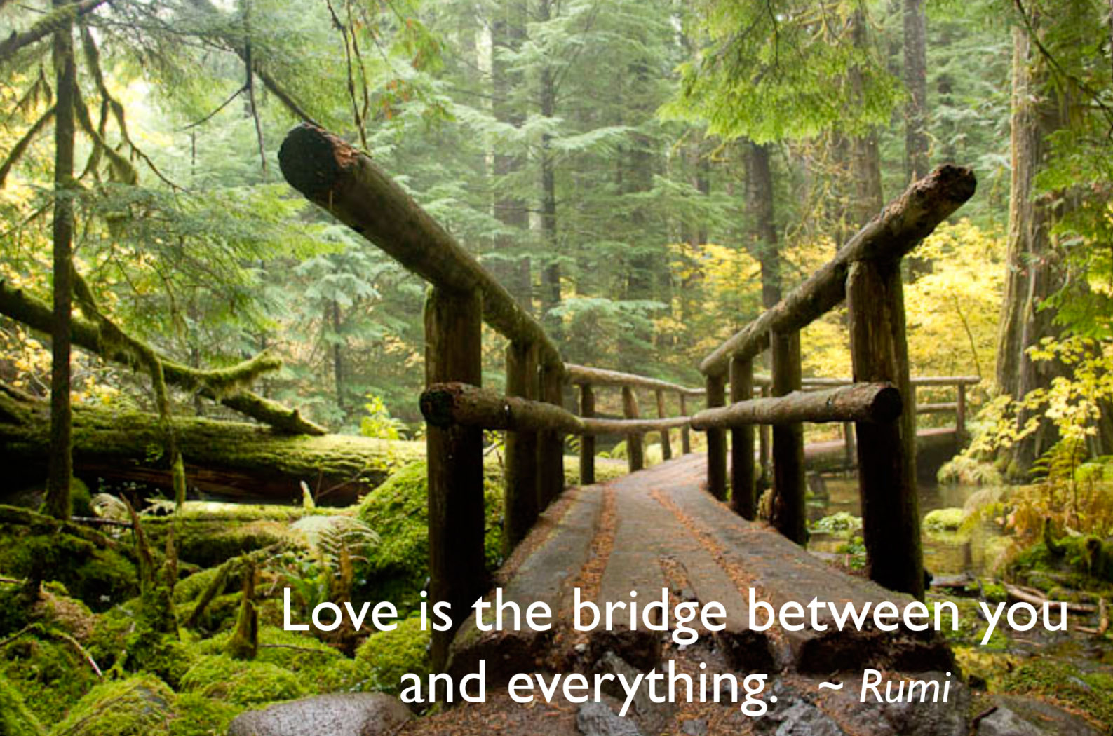 Love is the bridge . . .