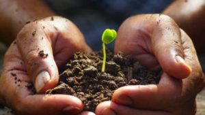 holding a seedling and soil